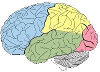 creatief-brein