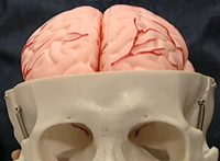 Breinvriendelijk werken hersenhelften workshop leren cursus training
