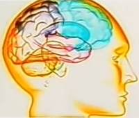Breinvriendelijk werken en leren workshop