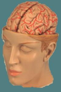 breinvriendelijk mindmappen hersenen